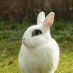 rabbit-717856_640